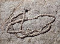 Close up of a fossil in miocene rock 22907002153| 写真素材・ストックフォト・画像・イラスト素材|アマナイメージズ