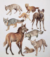 Close up of various wild dogs