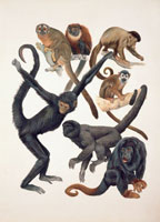 Close up of a group of primates