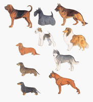 Close up of dogs of various breeds