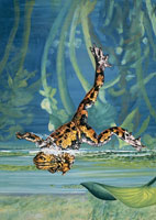 a yellow bellied toad jumping in water