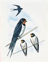four swallows perching on power line