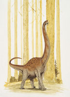 Pelorosaurus dinosaur in the forest