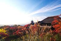 秋の清水寺と紅葉 22910001700  写真素材・ストックフォト・画像・イラスト素材 アマナイメージズ