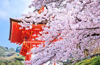 清水寺の仁王門と桜