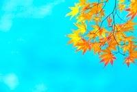 龍安寺の庭園の池の紅葉