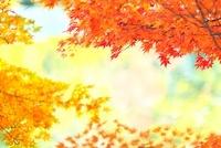 龍安寺の庭園の池の紅葉 22910002106| 写真素材・ストックフォト・画像・イラスト素材|アマナイメージズ