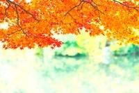 龍安寺の庭園の池の紅葉 22910002107| 写真素材・ストックフォト・画像・イラスト素材|アマナイメージズ