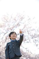 桜と指を差すランドセルの小学生男の子