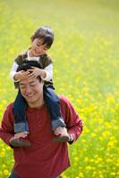 菜の花畑で娘を肩車する父親