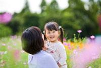 コスモス畑で母親に抱かれる娘