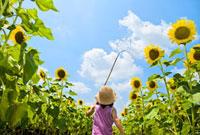 ヒマワリ畑で虫を追いかける女の子の後ろ姿 22946001316| 写真素材・ストックフォト・画像・イラスト素材|アマナイメージズ