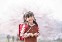 桜の花と新一年生の女の子