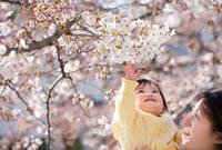 桜の下で母親に抱かれる女の子