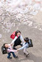 桜咲く遊歩道で手をつなぐ新一年生たち