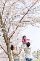 桜咲く公園で娘を抱き上げる父と母 22946003225| 写真素材・ストックフォト・画像・イラスト素材|アマナイメージズ