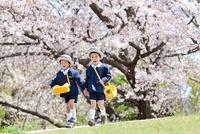 桜咲く公園を走る幼稚園児2人