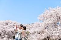 桜咲く公園で娘を抱く父と母 22946003270| 写真素材・ストックフォト・画像・イラスト素材|アマナイメージズ