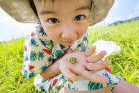 夏の土手で捕まえたアマガエルを持つ男の子