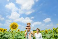 ひまわり畑で遊ぶ3人家族