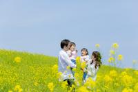 菜の花畑で娘たちを抱いて遊ぶ4人家族 22946004675| 写真素材・ストックフォト・画像・イラスト素材|アマナイメージズ