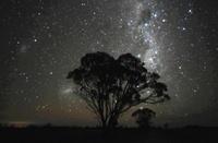 ユーカリの木と南十字星付近の星空