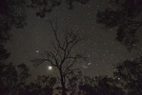 オーストラリア・木々の間のオリオン座と木星