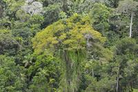 オーストラリアの熱帯雨林