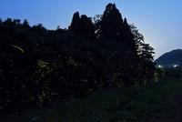 小川沿いに群れ飛ぶゲンジボタル 22995000472| 写真素材・ストックフォト・画像・イラスト素材|アマナイメージズ