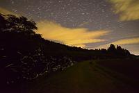 ホタルと春の星空  小道沿いの小川に沿って群れ飛ぶゲンジボタル 22995000479| 写真素材・ストックフォト・画像・イラスト素材|アマナイメージズ