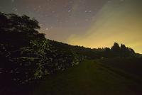 ホタルと春の星空  小道沿いの小川に沿って群れ飛ぶゲンジボタル 22995000481| 写真素材・ストックフォト・画像・イラスト素材|アマナイメージズ
