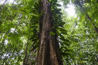熱帯雨林の着生植物,世界遺産「湿潤熱帯地域」
