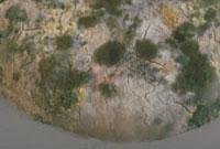 カビ 23018000024  写真素材・ストックフォト・画像・イラスト素材 アマナイメージズ