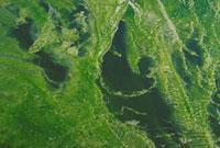 淡水藻 23018000096| 写真素材・ストックフォト・画像・イラスト素材|アマナイメージズ
