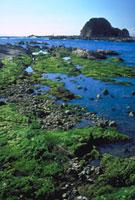 海そう 23018000547| 写真素材・ストックフォト・画像・イラスト素材|アマナイメージズ