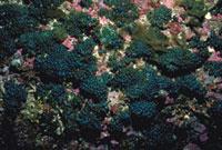 タマゴバロニア 23018001140| 写真素材・ストックフォト・画像・イラスト素材|アマナイメージズ