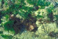 海そう 23018001537| 写真素材・ストックフォト・画像・イラスト素材|アマナイメージズ