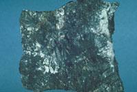 ルドウィッヒ石