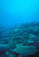 サンゴ礁 23018002056| 写真素材・ストックフォト・画像・イラスト素材|アマナイメージズ