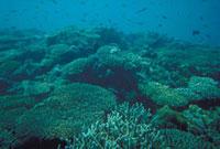 サンゴ礁 23018002057| 写真素材・ストックフォト・画像・イラスト素材|アマナイメージズ