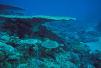 サンゴ礁 23018002058| 写真素材・ストックフォト・画像・イラスト素材|アマナイメージズ