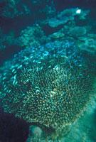 デバスズメ群棲 23018002068| 写真素材・ストックフォト・画像・イラスト素材|アマナイメージズ