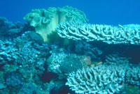 枝サンゴとソフトコーラル