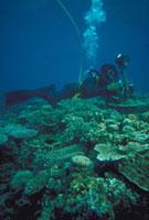 奄美大島 23018002075| 写真素材・ストックフォト・画像・イラスト素材|アマナイメージズ