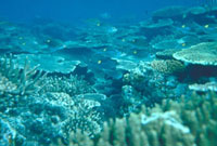 海底 23018002077| 写真素材・ストックフォト・画像・イラスト素材|アマナイメージズ