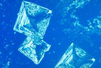 食塩の結晶 10×5