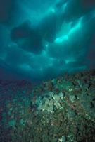 海底から見た流氷 23018002257| 写真素材・ストックフォト・画像・イラスト素材|アマナイメージズ