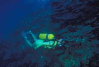 海底 23018002264| 写真素材・ストックフォト・画像・イラスト素材|アマナイメージズ