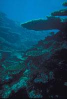 海底 23018002265| 写真素材・ストックフォト・画像・イラスト素材|アマナイメージズ