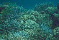 海底 23018002266| 写真素材・ストックフォト・画像・イラスト素材|アマナイメージズ